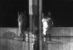 Pferde warten