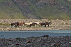 Pferde-Wind