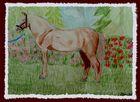 Pferde-Zeichnung