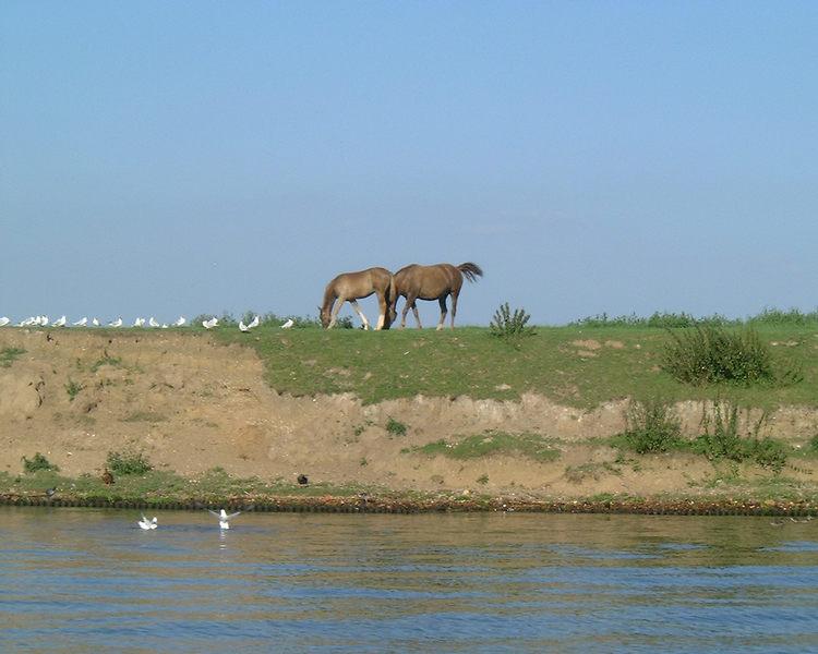 Pferde zwischen Himmel und Wasser