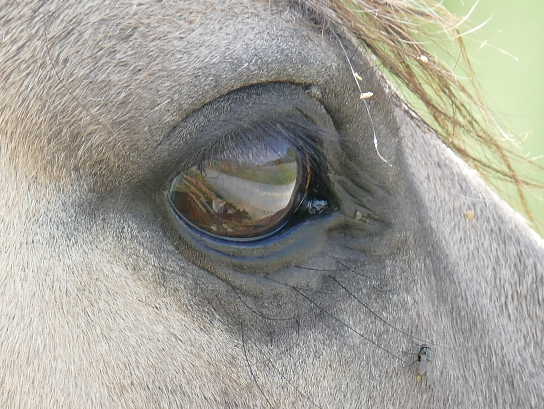 PferdeAugenBlick(e)
