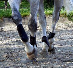 Pferdeballett