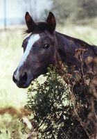 Pferdedame 2002