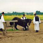 Pferdedressur durch den Csikós in der Puszta, Ungarn