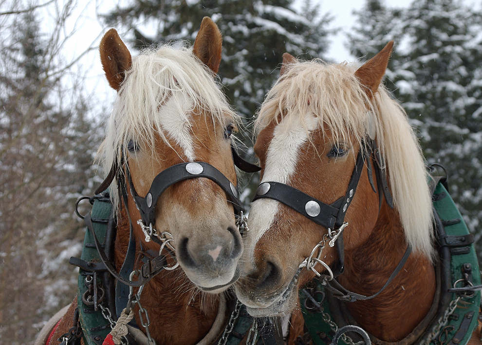 ... Pferdeflirt - ein Schnappschuß ...