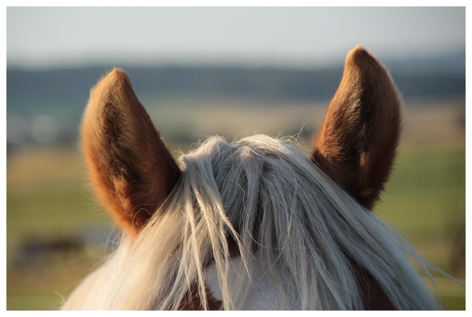 Pferdefotografie für Stadtmenschen