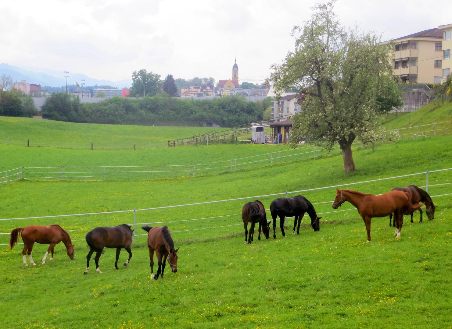 Pferdefreuden ...