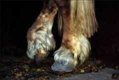 Pferdefüße