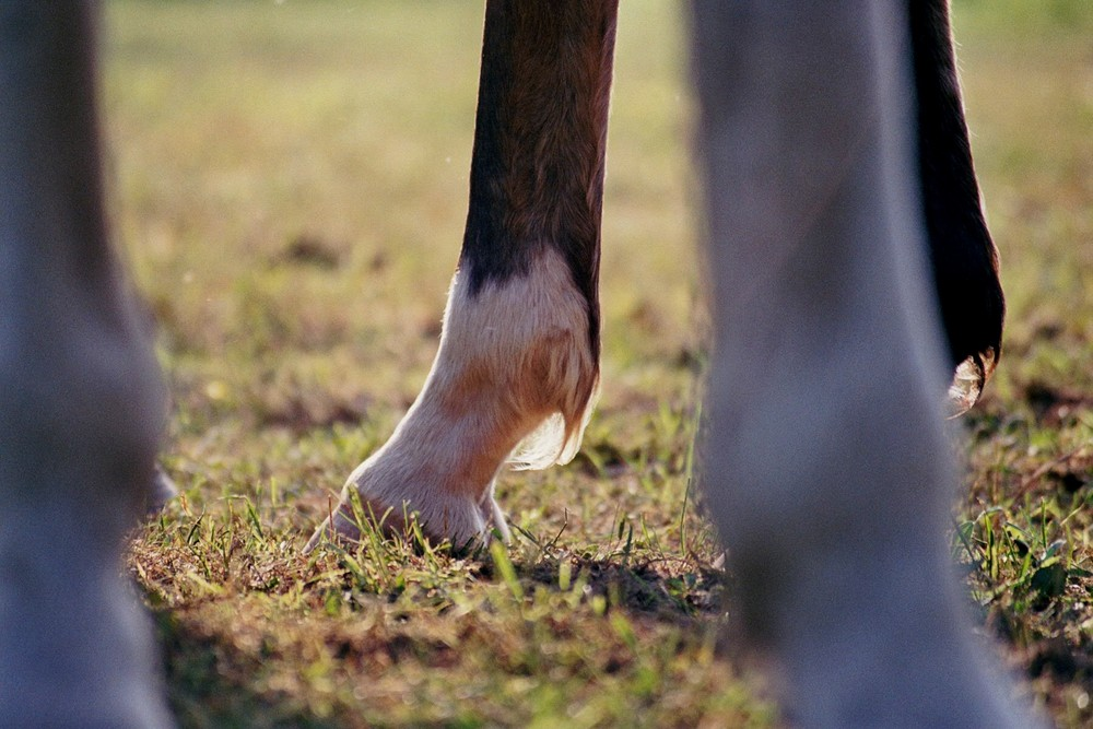 Pferdefuß