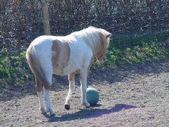 Pferdefußball 1