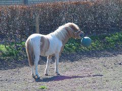Pferdefußball 2