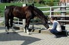 Pferdegeflüster... Hallo, ich tu dir doch nix!!!