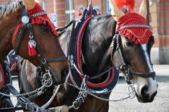 Pferdegespann in Karlsbad