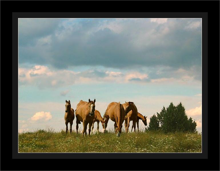 Pferdegruppe