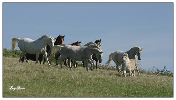 PferdeHerdenMix