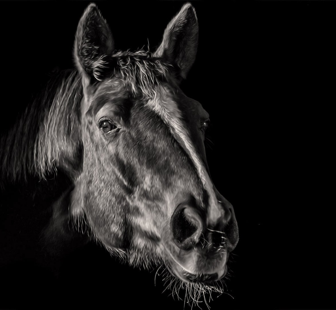 Pferdekopf-SW
