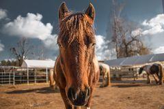 Pferde:Koppel