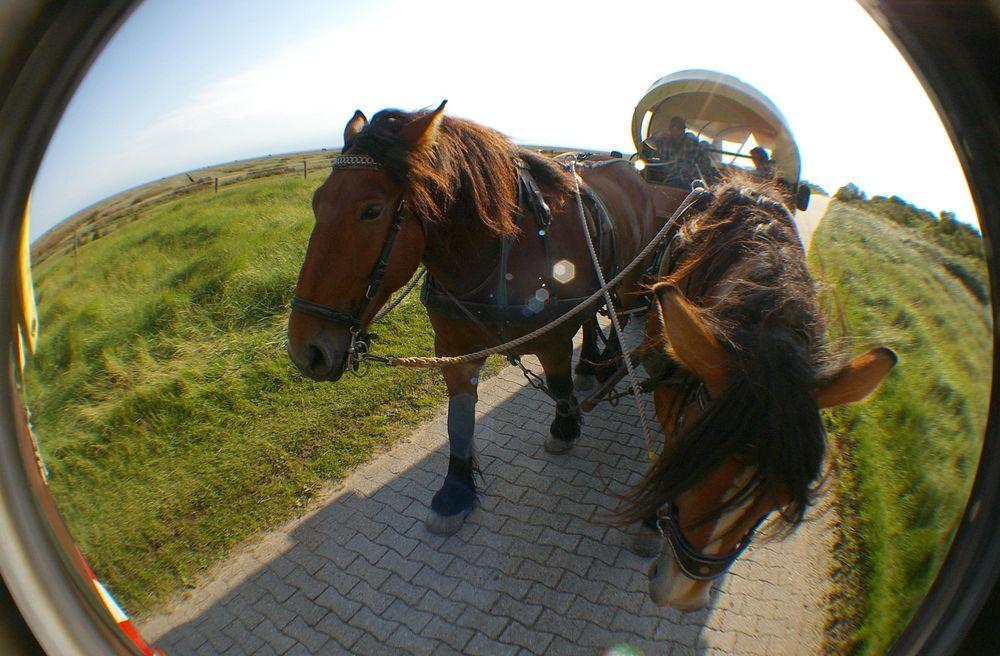 pensionen auf juist mit fruhstuck pferdekutsche auf juist mit fisheye objektiv foto