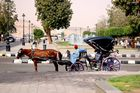 Pferdekutsche für Touristen