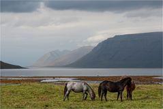 Pferdeland...