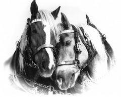 Pferdeliebe