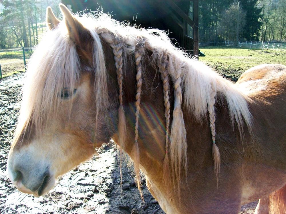 Pferdemähne 002
