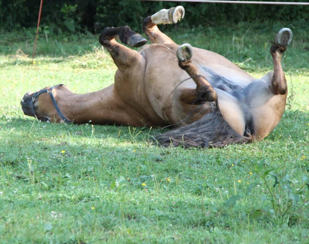 Porno Pferd