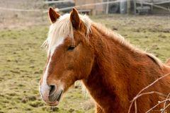 Pferdeporträit