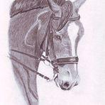 pferdeportrait 2