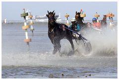 Pferdepower......