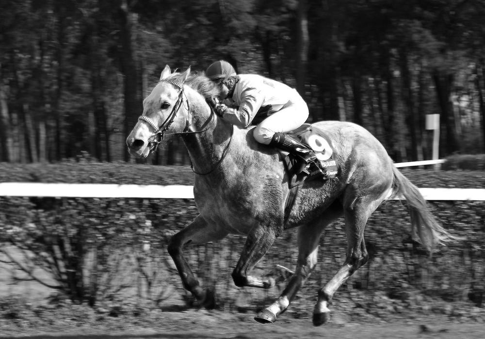 Pferderennen Seckenheim