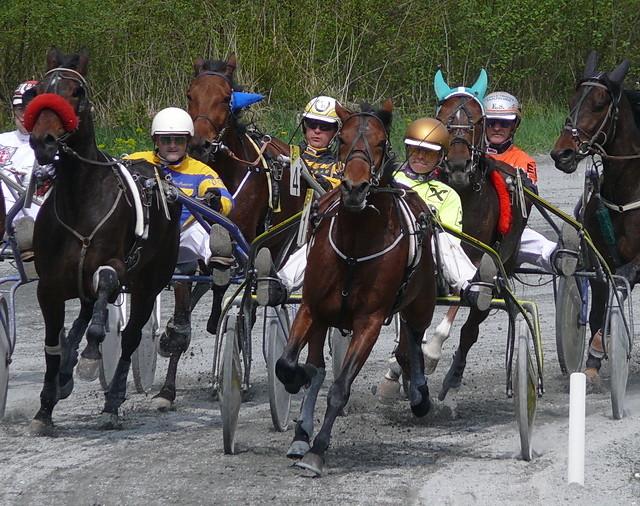 Pferdesport - Traber 01