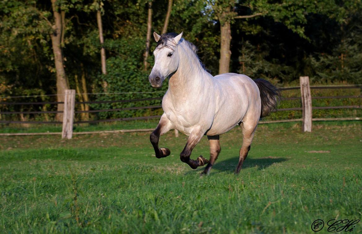 Pferdestärke