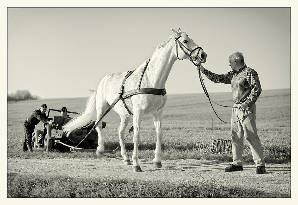 Pferdestärken ...