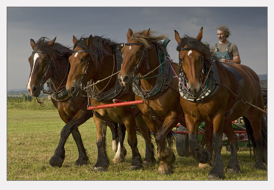 Pferdestark...