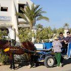 Pferdetaxi auf Djerba