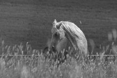 Pferdewelten..