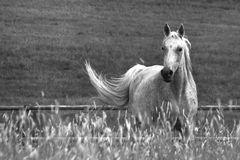 Pferdewelten