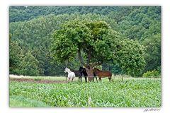 Pferdewetter...