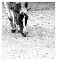 Pferd....ggg