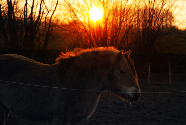 Pferdiger Sonnenuntergang