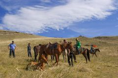 Pferdkontrolle