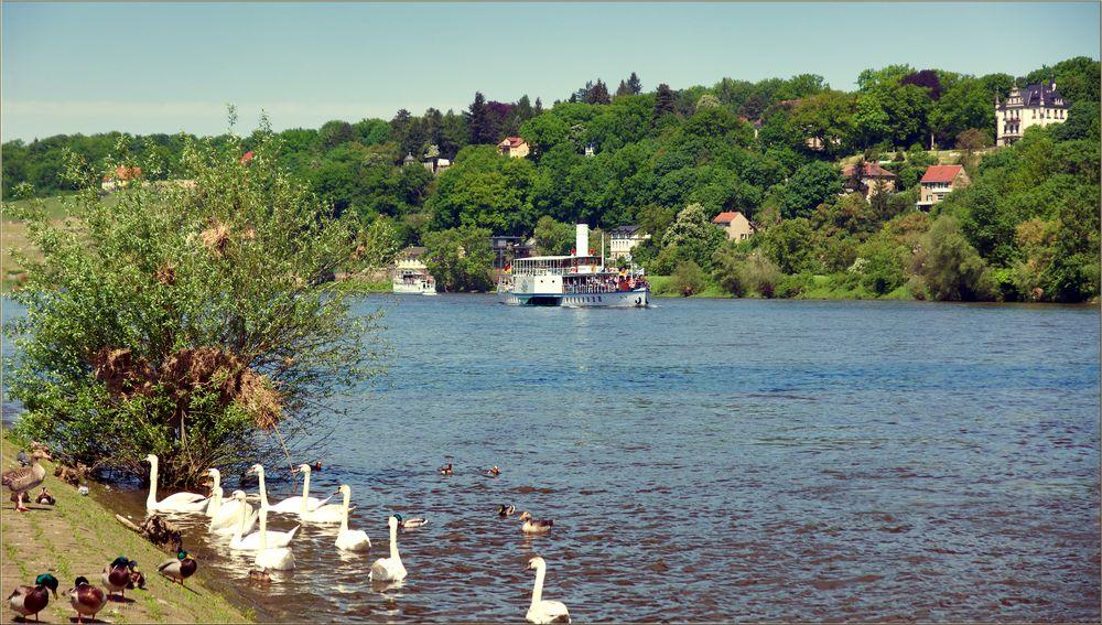 Pfingstausfahrt auf der Elbe bei Dresden (Bild 5)