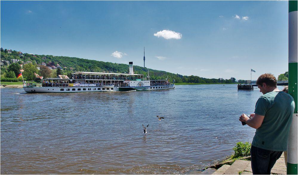 Pfingstausfahrt auf der Elbe bei Dresden (Bild 6)