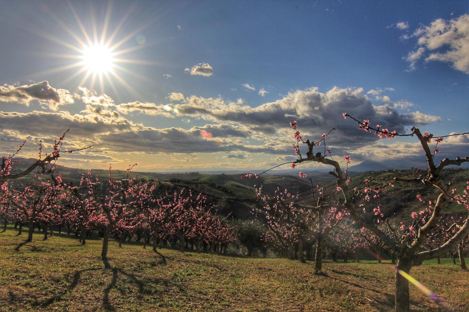 Pfirsichblüte, Früchte der Römer