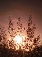 Pflanze an einem sonnigen Tag