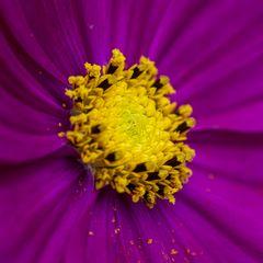 Pflanze Blüte nah-0704