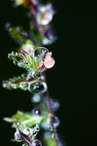 Pflanze im Farbrausch