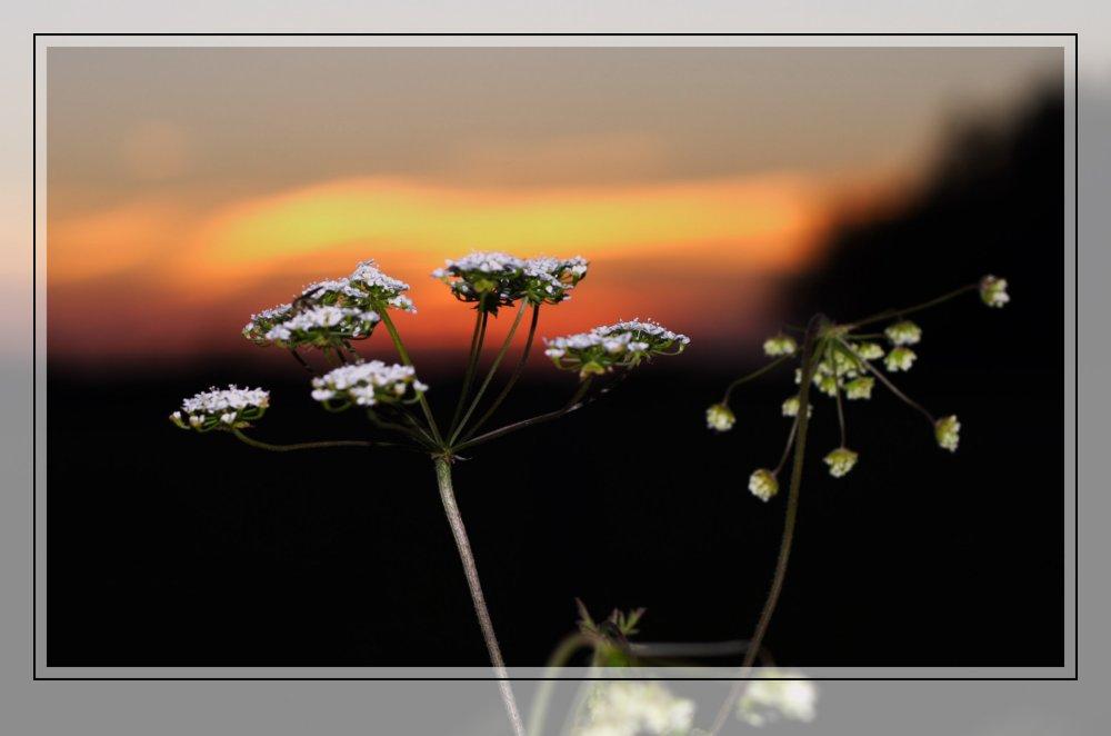 Pflanze im Sonnenuntergang