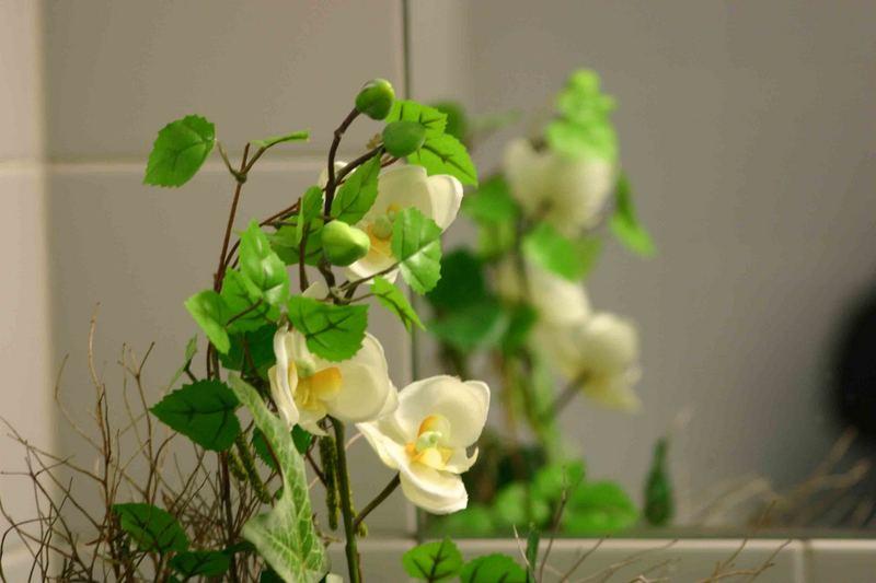 Pflanze in der Toilette